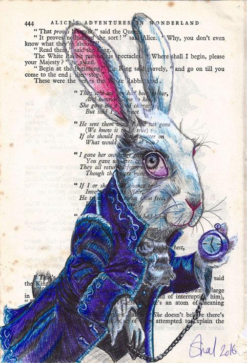 rabbit 72dpi
